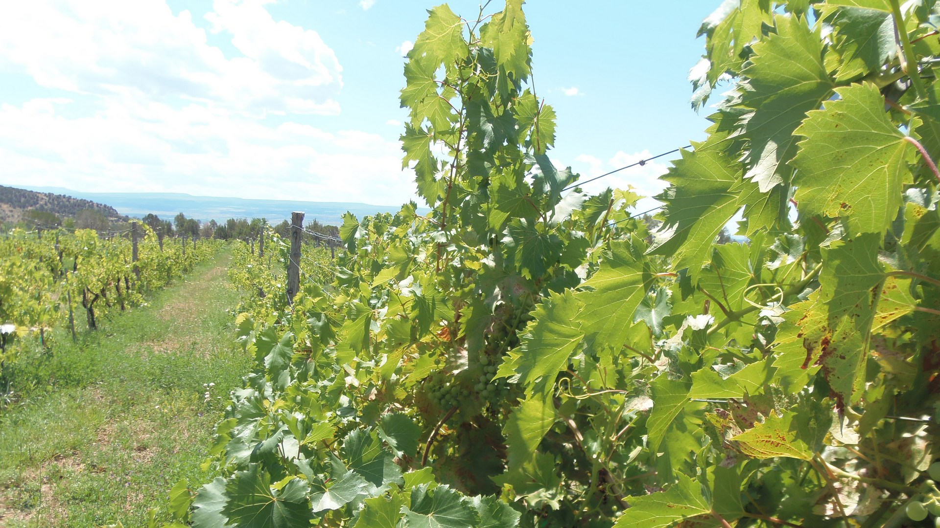 Leroux-Creek-VineyardsCO-1980w-1080h